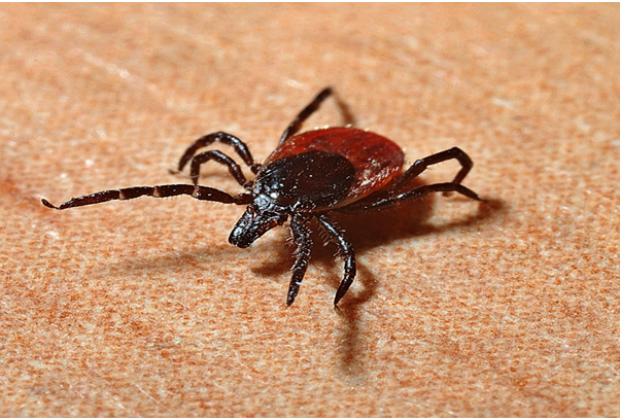 Can Lyme disease be fatal